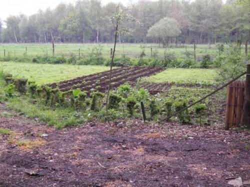 aardappelveldje