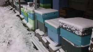sneeuw, vliegplank