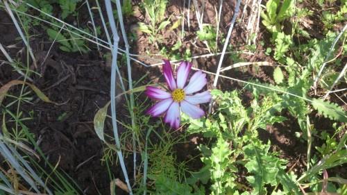 bloemenmengsel voor insecten