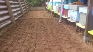aanplanting crocussen