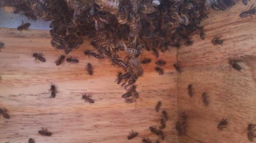 ecokast, doorhangen bijen