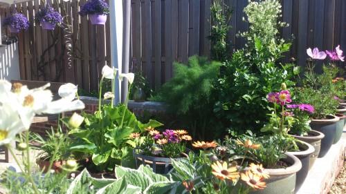 terras, zomerbloemen