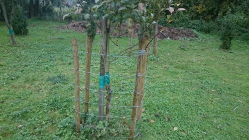 fruitbomen, kleine wintervlinder, lijmband